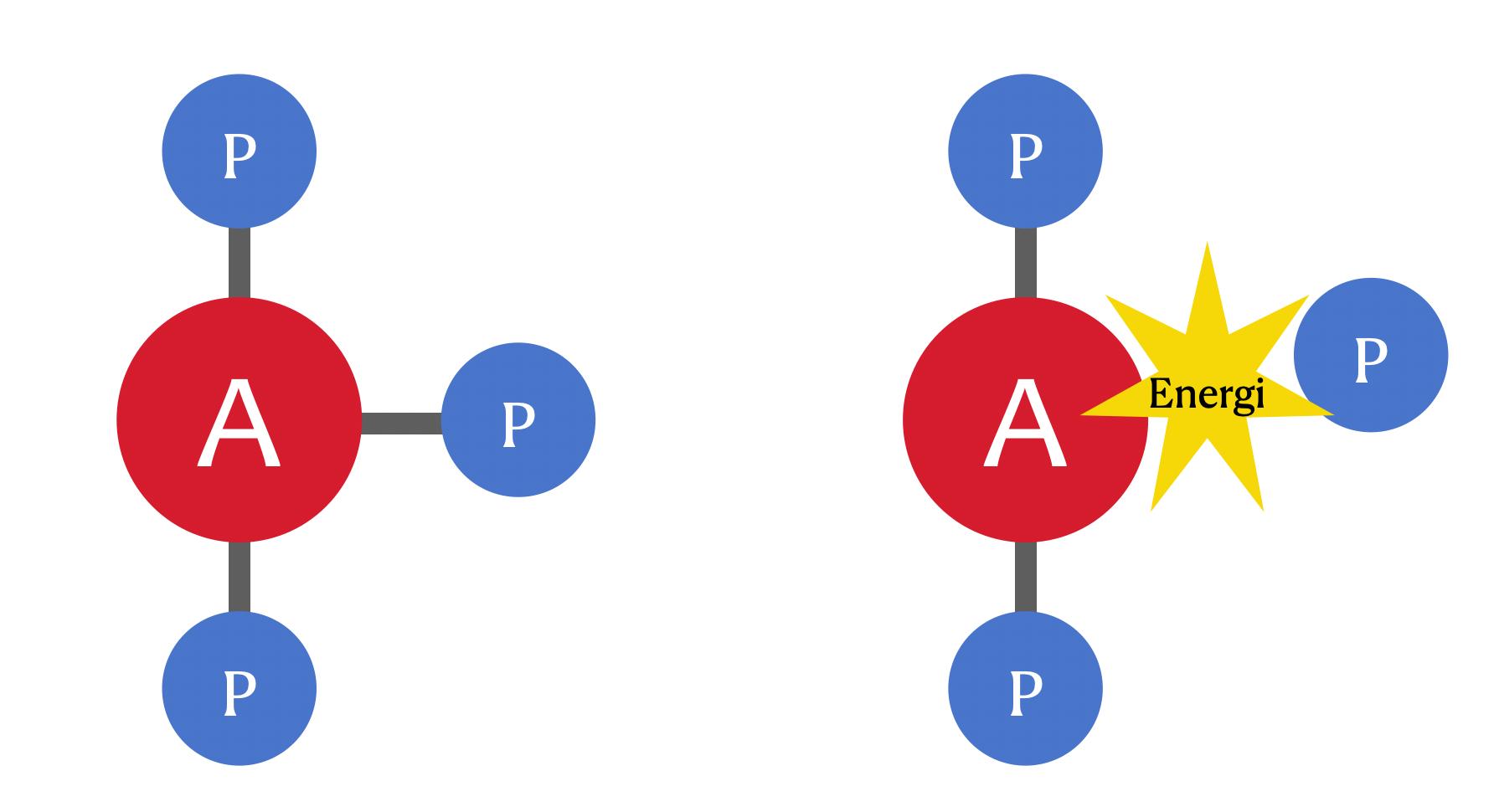 ATPADP